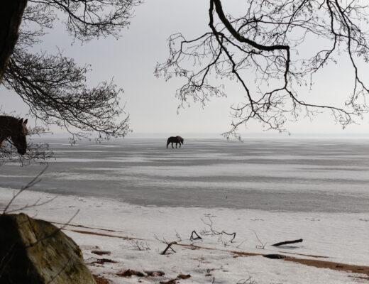 Plötsligt galopperar Svadi ut på sjön. Oron hålls undan genom bönen.